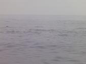 2014.06.16~18東北角海岸宜蘭賞鯨豚(五):賞鯨豚&龜山島-077.JPG