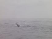 2014.06.16~18東北角海岸宜蘭賞鯨豚(五):賞鯨豚&龜山島-079.JPG