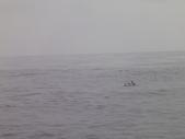 2014.06.16~18東北角海岸宜蘭賞鯨豚(五):賞鯨豚&龜山島-080.JPG