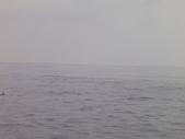 2014.06.16~18東北角海岸宜蘭賞鯨豚(五):賞鯨豚&龜山島-082.JPG