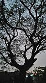 SONY Xperia M4 Aqua Dual 實拍:2015-11-01 17.40.55.jpg