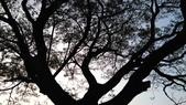 SONY Xperia M4 Aqua Dual 實拍:2015-10-09 17.20.07.jpg