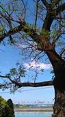 SONY Xperia M4 Aqua Dual 實拍:2015-11-29 11.23.48.jpg