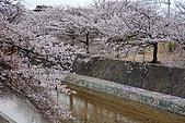 日本夙川公園:_MG_1553_b.jpg