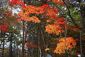 輕井澤_中輕_石頭教堂:_MG_8418_a_b.jpg