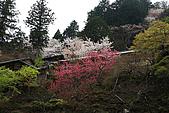 保津川_日本京都嵐山:_MG_2081_b.jpg