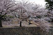日本夙川公園:_MG_1559_b.jpg
