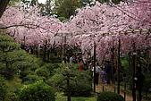 日本京都平安神宮_粉紅垂櫻:_MG_2136_b.jpg