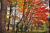 輕井澤_中輕_石頭教堂:_MG_8421_a_b.jpg