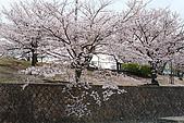 日本夙川公園:_MG_1563_b.jpg