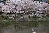 日本夙川公園:_MG_1573_b.jpg