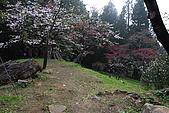 櫻花_98阿里山:_MG_0231_b.jpg
