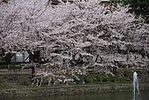 日本夙川公園:_MG_1575_b.jpg