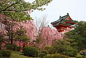 日本京都平安神宮_粉紅垂櫻:_MG_2140_b.jpg