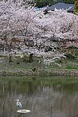 日本夙川公園:_MG_1579_b.jpg