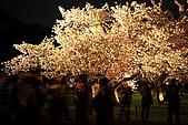 日本京都二條城:_MG_2273_b.jpg