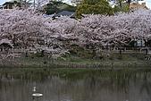 日本夙川公園:_MG_1582_b.jpg