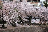 日本夙川公園:_MG_1587_b.jpg