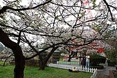 櫻花_98阿里山:_MG_0244_b.jpg