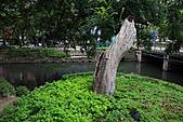 新竹市一角落:_MG_4596_b.jpg