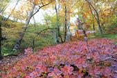 上湖區_十六湖國家公園 Plitvice Lakes N.P_克羅埃西亞Croatia:_5D30241_b.jpg
