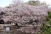 日本夙川公園:_MG_1593_b.jpg
