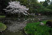日本京都平安神宮_粉紅垂櫻:_MG_2147_b.jpg