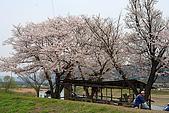 保津川_日本京都嵐山:_MG_1978_b.jpg