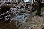 日本夙川公園:_MG_1494_b.jpg