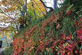 上湖區_十六湖國家公園 Plitvice Lakes N.P_克羅埃西亞Croatia:_5D30239_b.jpg