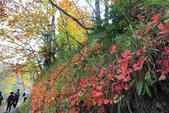 上湖區_十六湖國家公園 Plitvice Lakes N.P_克羅埃西亞Croatia:_5D30240_b.jpg