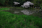日本京都平安神宮_粉紅垂櫻:_MG_2151_b.jpg
