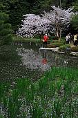 日本京都平安神宮_粉紅垂櫻:_MG_2154_b.jpg