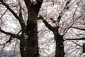 保津川_日本京都嵐山:_MG_1984_b.jpg