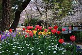 日本夙川公園:_MG_1523_b.jpg