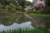 日本京都平安神宮_粉紅垂櫻:_MG_2155_b.jpg