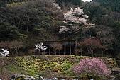 保津川_日本京都嵐山:_MG_2028_b.jpg