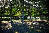 台北市大安森林公園_光影:_MG_9449_a_b.jpg