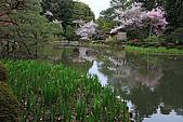 日本京都平安神宮_粉紅垂櫻:_MG_2156_b.jpg