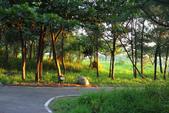 台東_琵琶湖_美麗的倒影:CD6A9043_b.jpg