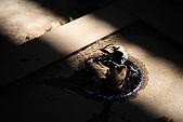 廢棄的木材工廠:_MG_5749_b.jpg