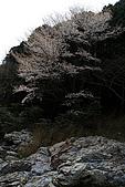 保津川_日本京都嵐山:_MG_2033_b.jpg