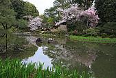 日本京都平安神宮_粉紅垂櫻:_MG_2157_b.jpg