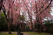 日本京都平安神宮_粉紅垂櫻:_MG_2132_b.jpg