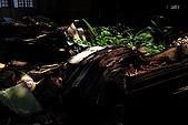 廢棄的木材工廠:_MG_5774_1_a_b.jpg
