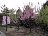 2011 中國北京:吳 20110412-01.jpg