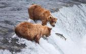 RainReader Note:grizzly-bears-fishing-for-salmon-pk2znlj.jpg