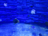 20140302_野柳海洋館_海洋科技館_銅鑼客家風味晚餐:20140302_096.jpg