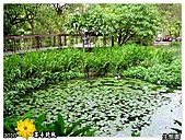 2010_菊宴臺北城:991130_02_2010士林官邸菊展_14生態園.jpg
