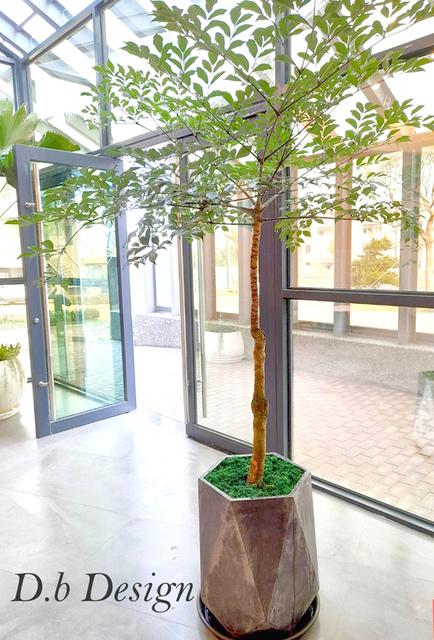 室內植物綠化 / 辦公大樓>大廳入口 - 室內植物綠化>辦公大樓